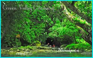 Wisata hutan