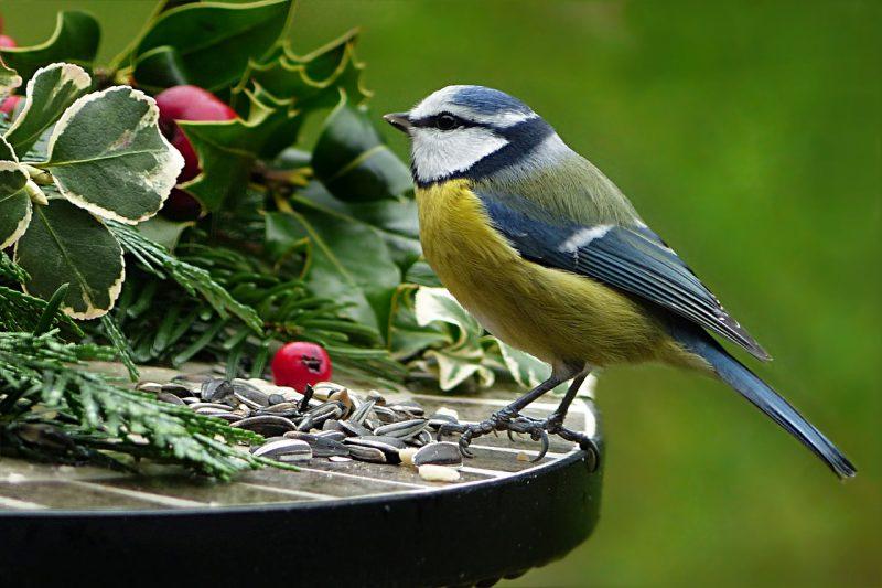 Faktor Penyebab Burung Susah Berkicau