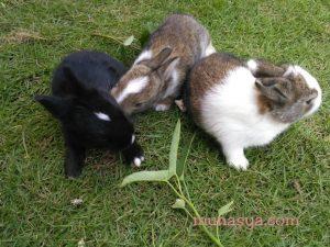 Anak kelinci